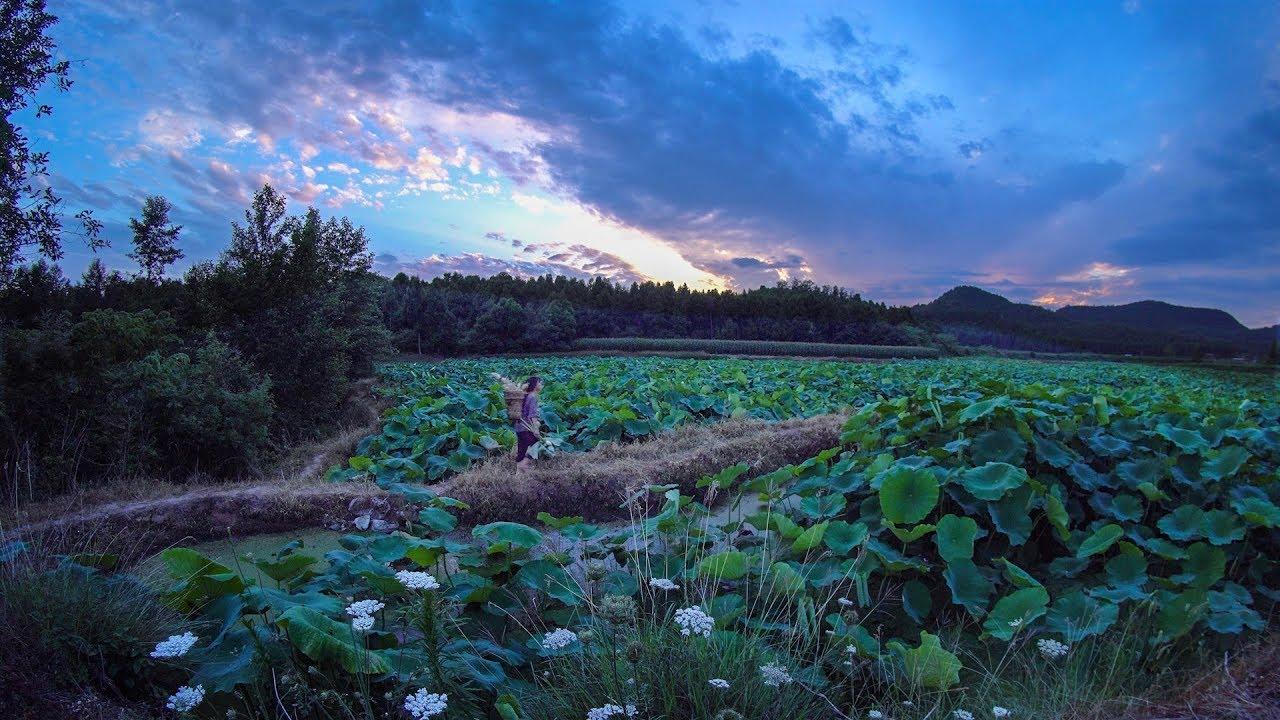 ただ農作業しているだけでアート…中国が誇るカリスマVloggerリー・ズーチーの世界